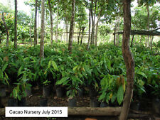 300 Acre Teak and Cacao Plantation Property for Sale