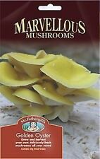 Golden Oyster Mushroom Seeds Spores. DIY Grow Your Own. Yields Minimum 1kg