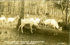 Houghton Lake,MI. White Deer at Johnson's Rustic Resort 1942  RPPC C-1494