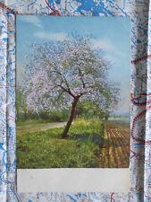 Landschaft Baum Blüten Feld Gemälde Kunstwerk Postkarte Ansichtskarte 3044