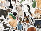 50 Fun Cat Kitty Pet Meme Stickers Decals For Laptops Phone Journal Mix Set