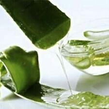 New 100 Seeds Aloe Vera Seed Succulent Plant Rare Herbal Medicinal Vegetables FR