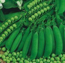 Vegetable - Pea - Petit Pois Waverex - 200 Seeds - Economy