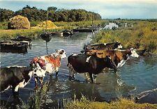BR25175 Image de Grande Briere Le gue cow vaches France