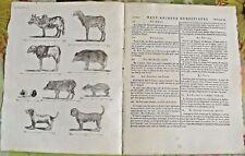 1784 Ancienne Gravure Estampes EO.le Zébu ,Pécari,Paca,le cochon d'Inde,Siam