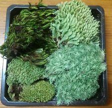 1 box, have a 4 types dried moss for terrariums garden, mini terrariums
