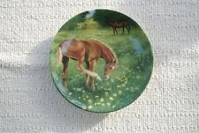 'Finding Her Feet'  Royal Worcester Fine Porcelain Plate  'Tomorrow's Champion'