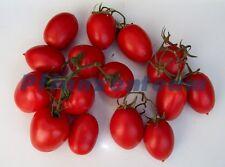 Uova tomate-Roma tomate-ROMA - 20 semi