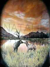 """Elk Kiss"" by Natalie Taylor"