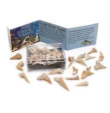 Box Of 13 Fossil Shark Teeth