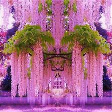 4pcs Purple Wisteria Flower Seeds Perennial Climbing Plants Bonsai FREE SHIP
