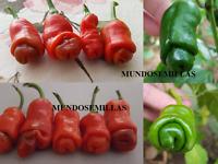 PIMIENTO EROTICO ( el auténtico ) peter pepper  Semillas seeds
