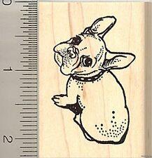 Cute French Bulldog rubber stamp E9305 WM bull dog