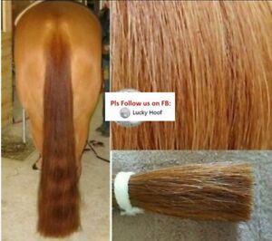 "Genuine OZ Double Horse False Tail 80CM 32"" Light Chestnut False Horse Tail AUST"
