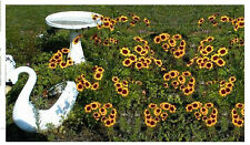 Plains Coreopsis Golden Orange  Blackeyed Perennial Flowers  Over 200 Seeds