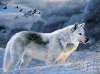Blanche Neige Loup sur Mountain 3D Moving Picture 300 mm x 400 mm-Vendeur Britannique