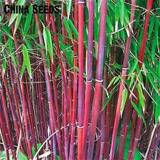 50 Pieces Seeds Fresh Giant Moso Bamboo Garden jardin Beautiful Bonsai Sementes