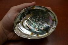 "ONE SIDE POLISHED GREEN ABALONE SEA SHELL 4 1/2"" - 5"" #7952"