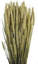 1kg (400 Stems) Dried Wheat Barley Tarwe Triticum - Flower Arranging Large Bunch