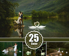 25 swan pelican stork water bird Photo Overlays, Photography Overlay, png files