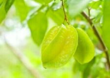 Delicious Carambola Seeds Here For You!