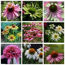 100Pcs Echinacea Flower Seeds 10 Kinds Garden Wonderful Bright Perennial Plants