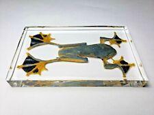 RHACOPHORUS REINWARDTII. JAPAN FLYING FROG embedded in casting resin.