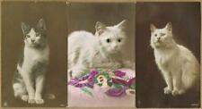 Cat Collectable Postcard Collections/Bulk Lots