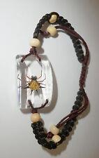 Insect Bracelet Spiny Spider Gasteracantha kuhlii Specimen SL15 clear