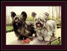 English Print Skye Terrier Puppie Dogs Dog Puppy Vintage Art Picture Poster
