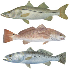 Trout, Snook, Redfish Decal Mini