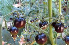 Black Cherry Tomato Seeds Non GMO Good for Sauce and Fresh Salsas Salads