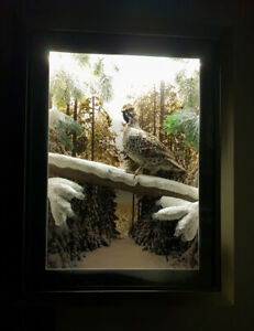 Taxidermy goouse Hazel grouse or Hazel hen Picture into the furniture