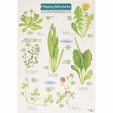 Playing Field Plants (FSC Mini Projects), Very Good Condition Book, Farley, Rebe