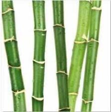 Gigante De Bambú tallos Cañas Baño Ducha Cortina Poliéster 180cm X 200cm