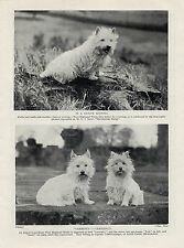 WESTIE  WEST HIGHLAND WHITE TERRIER THREE NAMED DOGS OLD VINTAGE 1934 DOG PRINT