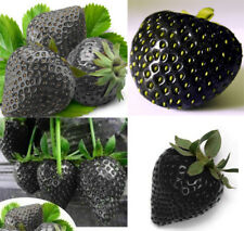 200PCS Black Strawberry Seeds Strawberries Seed Organic Fruits Home Garden PT150
