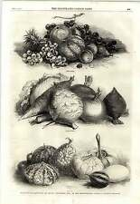 1862 Exhibition Fruits Vegetables Horticultural Society Fruit Cattle Food Squash