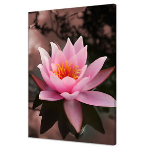 BEAUTIFUL PINK WATER LILY FLOWER MODERN DECOR CANVAS PRINT WALL ART PICTURE