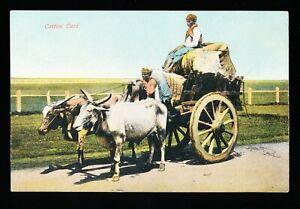 Postcard – Bullocks with Cotton Cart (1927)