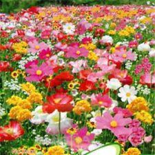 200pcs Wild Flower Seeds Garden Meadow BUMBLE BEE BUTTERFLY Perennial Annual