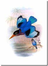 Vintage Japanese Bird Art CANVAS PRINT~ Asian Kingfisher A3