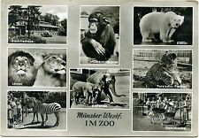 Germany Unposted Collectable Animal Postcards