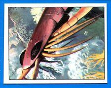 ANIMALI PREISTORICI - Panini 1975 - Figurina-Sticker n. 38 -New