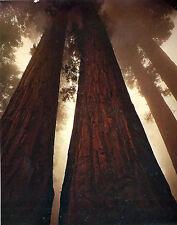Fotografia d'arte contemporanea Masters 20TH secolo 5 DVD STOCK Classics HD A-Z