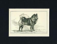 Dog Art Print 1900 Chow Chow Dog Antique