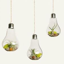 3 Pieces Hanging Air Plant Pots Air Plant Containers Glass Hanging Planter