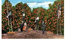 "Vintage Color Unused Linen Postcard - ""Picking Oranges in Florida"""