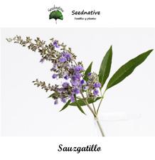 Sauzgatillo - Vitex agnus castus - 50 semillas - seeds