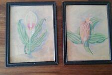 2 VTG '59 Botanical Lily Bromeliad Colored Pencil Original Drawings Signed F McK